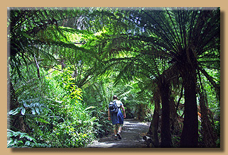 Maits Rest Rainforest Walk