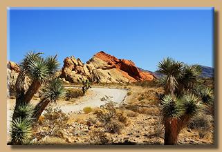 Wüstengewächse säumen den Weg
