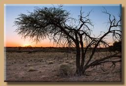 Kalahari Sunset - Relaxliegen