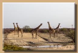 Eine unerwartete und schöne Begegnung mit Giraffen
