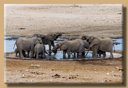 Eine Elefantenherde kühlt sich ab