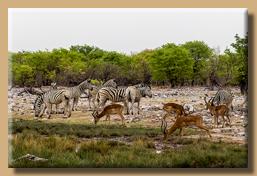 Viele Tiere am Wasserloch Goas