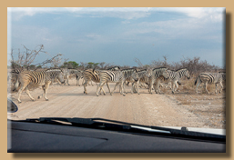 Hier haben die Zebras Vorfahrt
