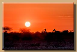 Etosha-Sunset